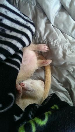 Amber Sleeps